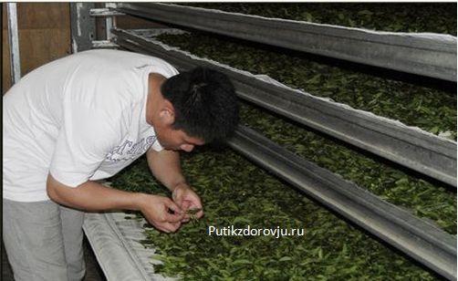 Зелёный чай – польза и 5 причин начать пить его-3