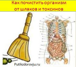 http://putikzdorovju.ru/ kak-pochistit-organizm-ot-shlakov-i-toksinov-1