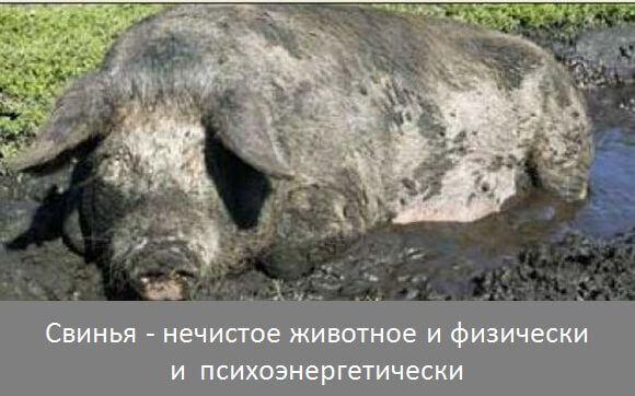 Вред свинины-3