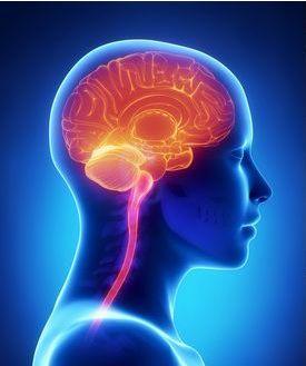 Как активизировать работу мозга-1