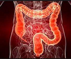 Функция толстого кишечника для стимуляции органов1