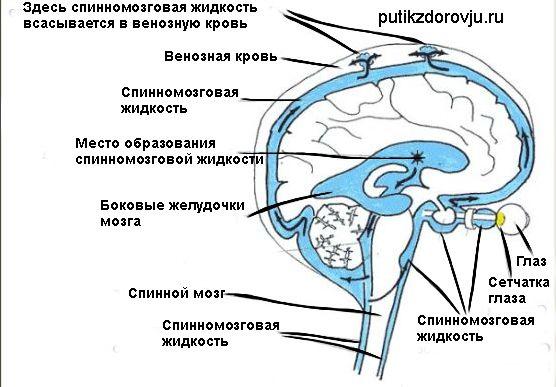Спинномозговая жидкость-2