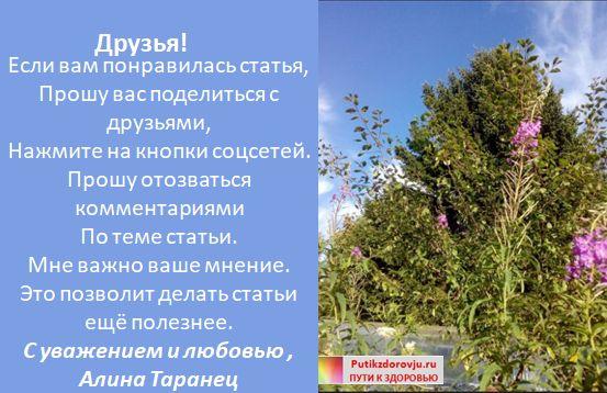 Польза Иван чая для женщин-2