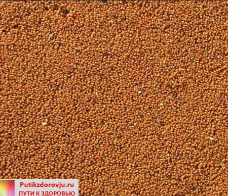 О полезных свойствах рыжикового масла-4