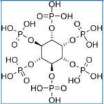 Вред фитиновой кислоты в орехах, крупах, бобовых