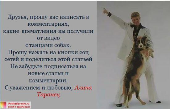 Танцы с собаками-4