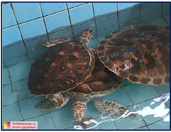 Азия Сафари.Черепахи-4