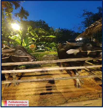Животные возле театра Siam Niramit-2