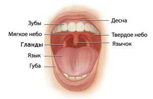 vred-posle-udaleniya-gland1